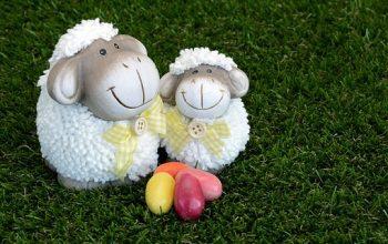 sheep-3264730__340